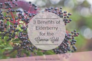 Benefits of Elderberry for the Common Cold. Looking for a natural way to help your cold this season? Elderberry is your friend.